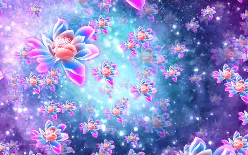 高清大气莲花花海动态动态壁纸